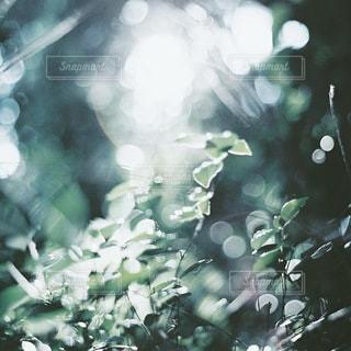 自然 - No.2086