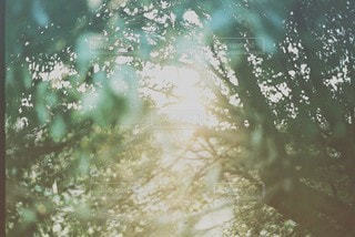 自然 - No.2085