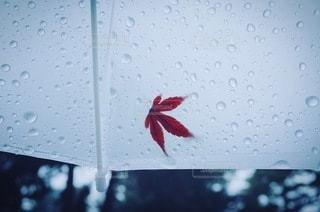 紅葉の写真・画像素材[2081]