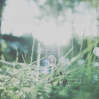 自然の写真・画像素材[2053]