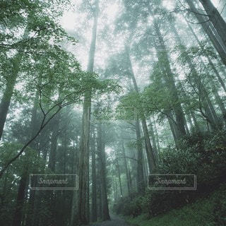 自然の写真・画像素材[2036]