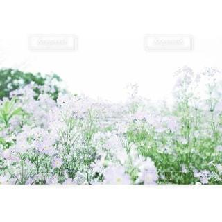 自然の写真・画像素材[2008]
