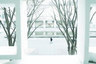 女性の写真・画像素材[1990]