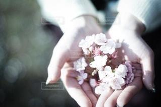 花の写真・画像素材[2118]