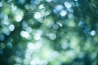 自然の写真・画像素材[90318]