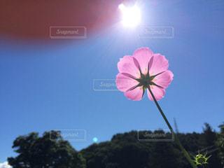 自然の写真・画像素材[304389]