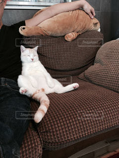 猫の写真・画像素材[304406]