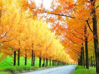 秋の写真・画像素材[304654]