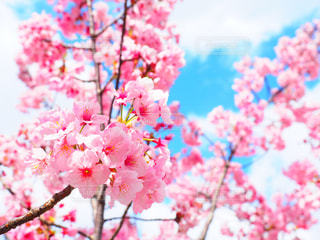 花の写真・画像素材[308956]