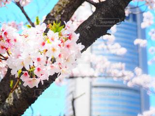春の写真・画像素材[312599]
