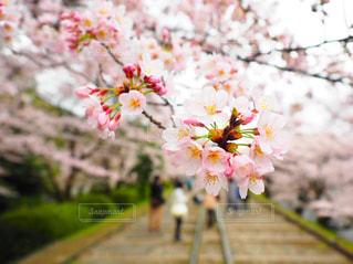花の写真・画像素材[321723]
