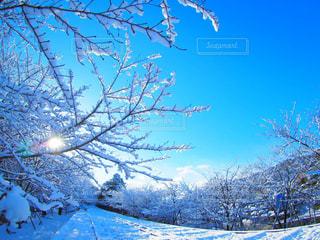 冬の写真・画像素材[321728]