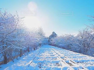 冬の写真・画像素材[321729]