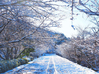 冬の写真・画像素材[321730]