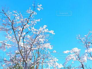 空の写真・画像素材[321731]