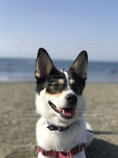 犬 - No.331708