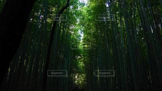 京都の写真・画像素材[304813]