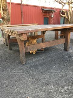 No.304986 猫