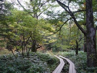 公園の木 - No.820264