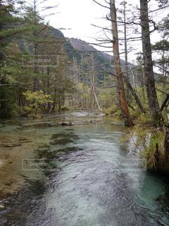 森を流れる川 - No.820287