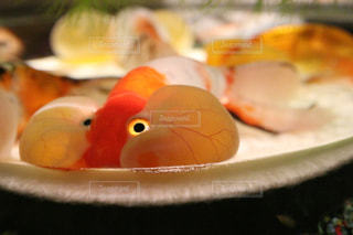 金魚の写真・画像素材[307252]