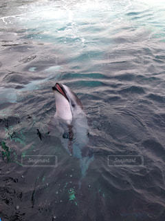 海の写真・画像素材[307259]