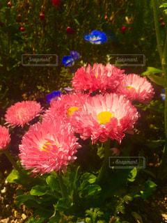 花の写真・画像素材[403165]