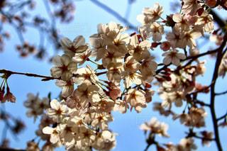 花の写真・画像素材[1091608]
