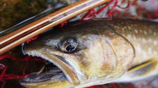 魚の写真・画像素材[305856]