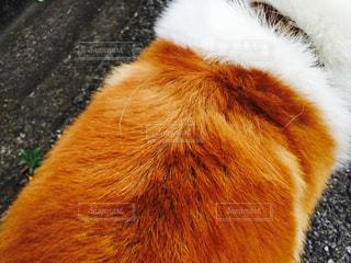 犬の写真・画像素材[306038]