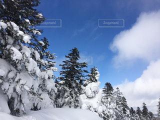雪の写真・画像素材[306043]