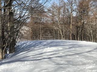 冬の写真・画像素材[352736]