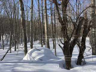 冬の写真・画像素材[352737]