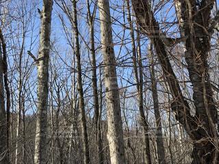 木の写真・画像素材[352738]