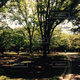 公園の写真・画像素材[306470]