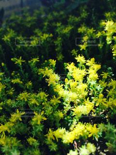 花の写真・画像素材[306479]