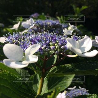 花の写真・画像素材[306482]