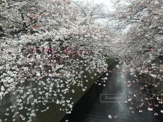 春の写真・画像素材[306602]