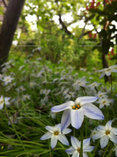 自然の写真・画像素材[306723]