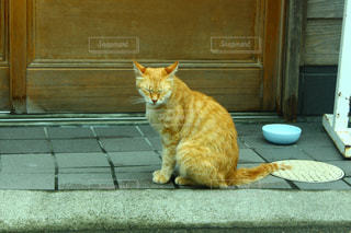 猫の写真・画像素材[307195]