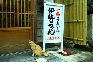 猫の写真・画像素材[307196]