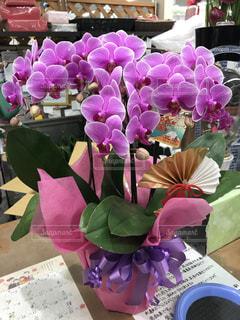 テーブルの上の紫色の花一杯の花瓶の写真・画像素材[1021816]