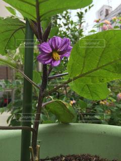 花の写真・画像素材[306802]