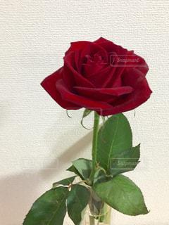花の写真・画像素材[306820]