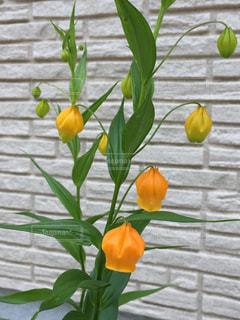 花の写真・画像素材[542424]