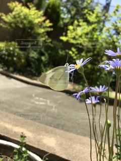 木の花の花瓶の写真・画像素材[1175899]