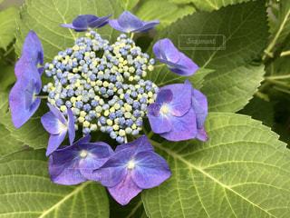 近くの植物に紫の花のアップの写真・画像素材[1208081]