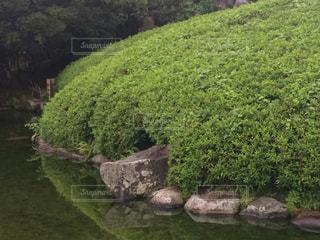 庭の写真・画像素材[308585]