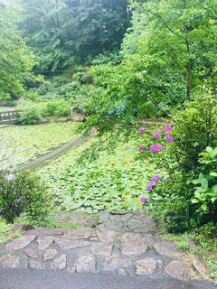 花畑のクローズアップの写真・画像素材[2878434]