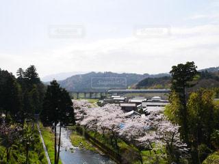 桜 - No.444012